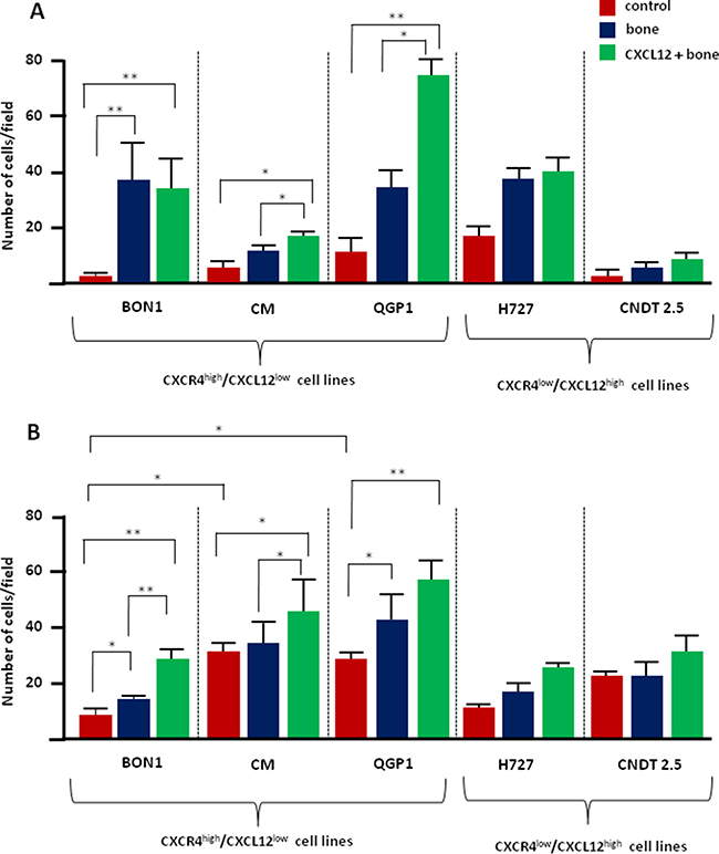 CXCL12 modulates the in vitro osteotropism of CXCR4high/CXCL12low NET cell lines.