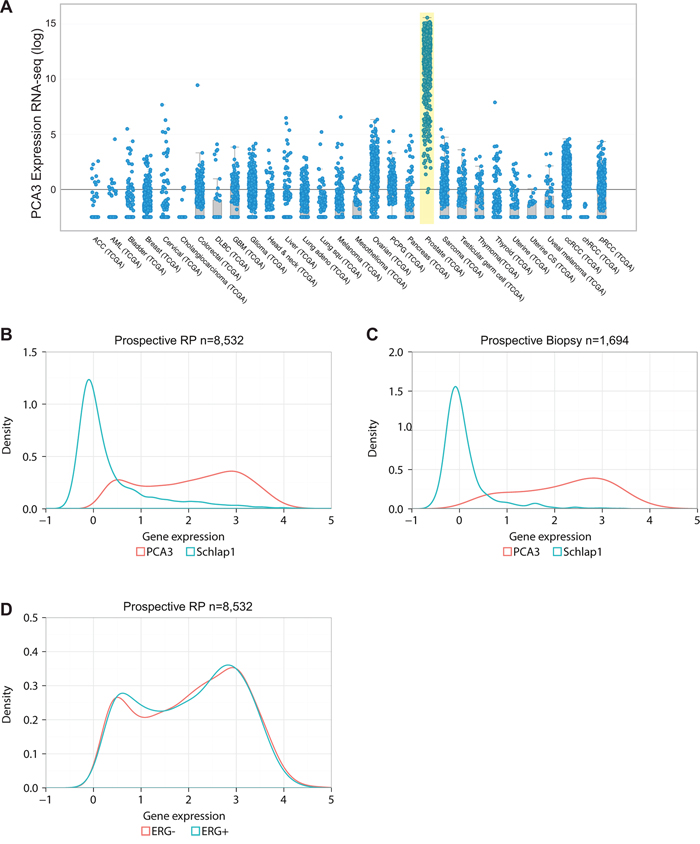 Pan-cancer and prostate-specific expression of PCA3.