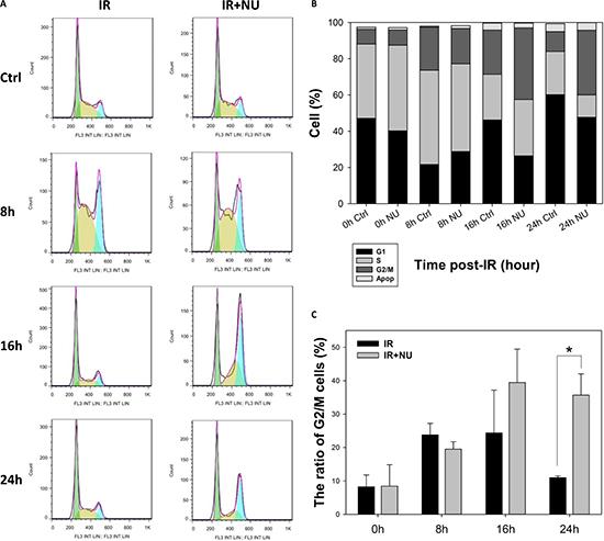 Inhibition of DNA-PKcs by NU7441 prolongs G2/M phase arrest.