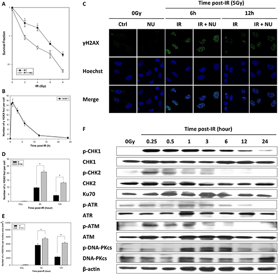Inhibition of DNA repair induces radiosensitivity in nasopharyngeal carcinoma.