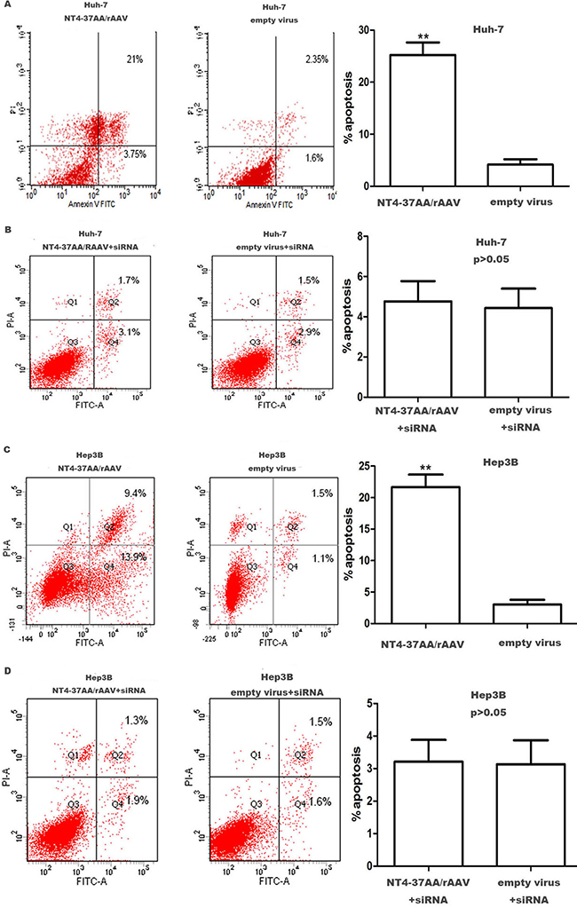 Transfection of NT4-37AA/rAAV increased the apoptosis of HCC cells.