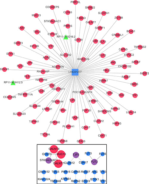 Gene network of the correlative genes of LINC01207.