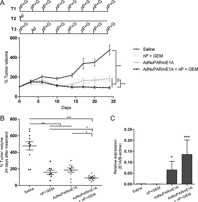 In vivo antitumoral activity of AdNuPARmE1A as a single agent or in combination with gemcitabine and nab-paclitaxel in MIAPaCa-2 tumors.