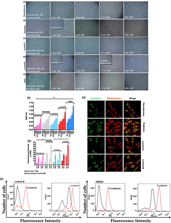 Morphology of stromal and epithelial cells during gradual PRP supplementation.