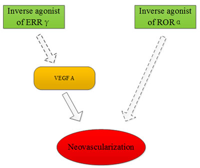 ERRγ and RORα may be targets for treatment of ischemic retinopathies.