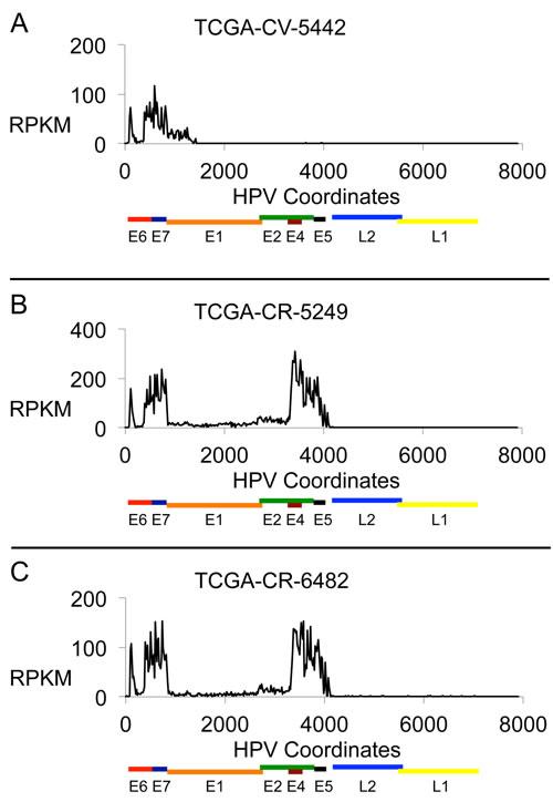 HPV16 RNA Expression Profiles.
