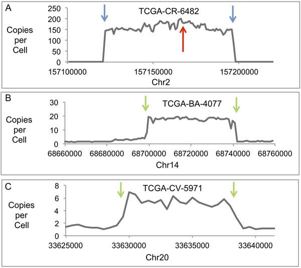 Human Genomic DNA Profiles of Amplified Regions.
