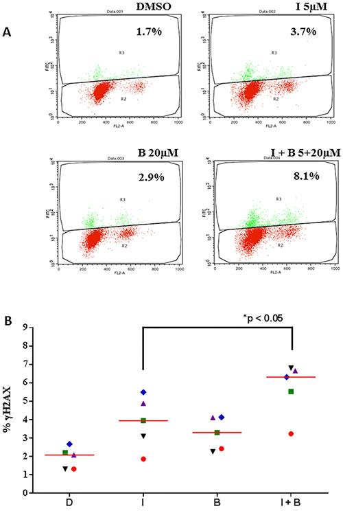Idelalisib and bendamustine combination results in enhanced DNA damage response.