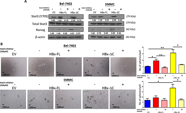 Effect of Stat3 inhibitor on HBx-induced self-renewal.
