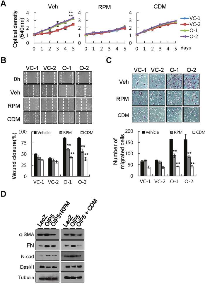 Inhibition of tumor cell growth and metastatic ability by rapamycin or cardamonin.