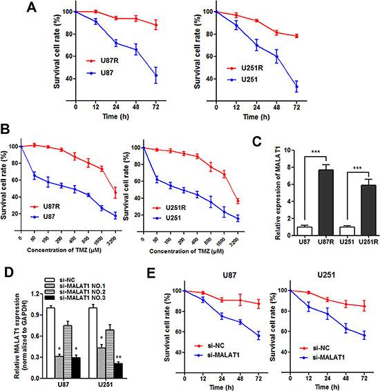 Knockdown of MALAT1 reverses chemoresistance in TMZ resistant cells.