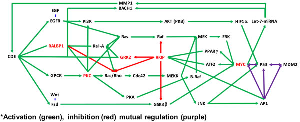 Molecular pathways affected by didymin.