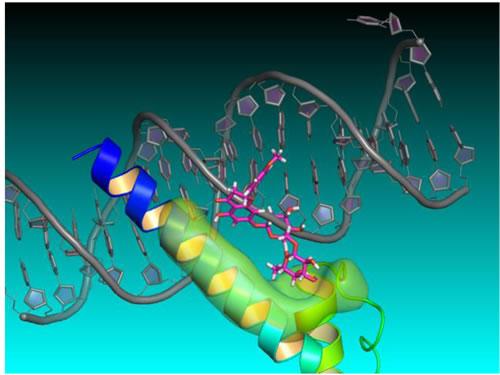 Didymin-NMyc three dimensional ternary homology model.