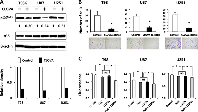 Effect of treatment with the CLOVA cocktail on the level of serine 641 phosphorylation of glycogen synthase (pGSS641).