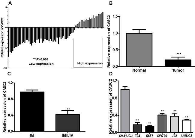 LncRNA CASC2 expression is decreased in bladder cancer.