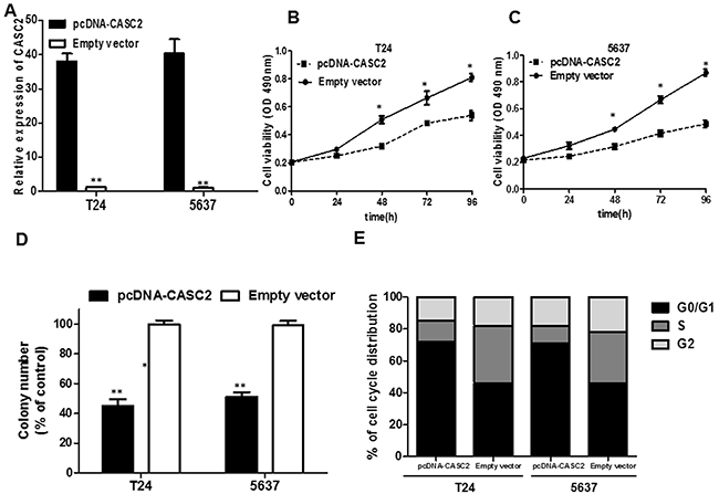 The effect of CASC2 overexpression on cell viability and cell cycle.