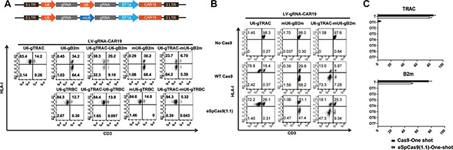 High-fidelity multiple gene ablation by the one-shot CRISPR to generate universal CAR T cells.