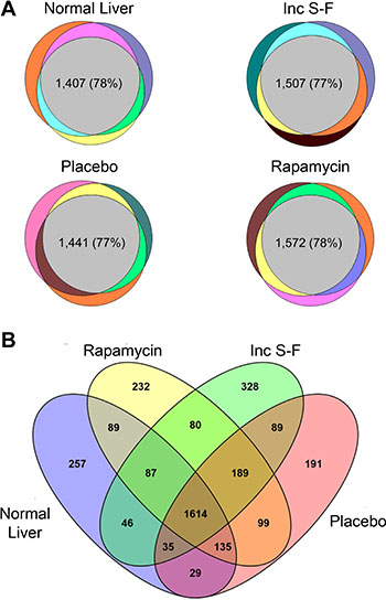 Venn diagrams showing the detection of peptides and proteins across biological replicates for each experimental group and for all experimental groups.