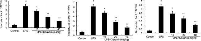 Effects of geraniin on inflammatory inflammatory cells infiltration in the BALF.