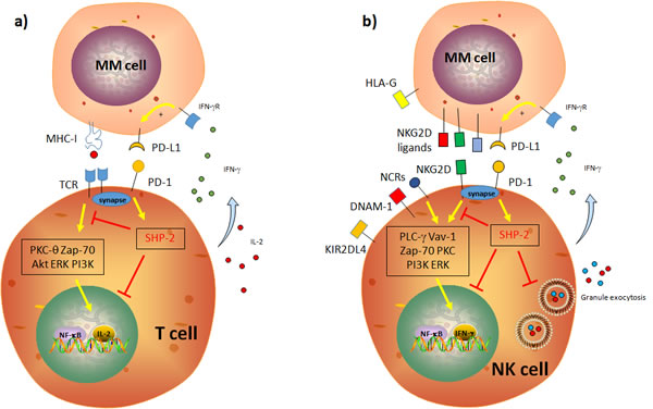 Schematic representation of the impact of the PD-1/PD-L1 axis on T and NK cell cytotoxic functions.