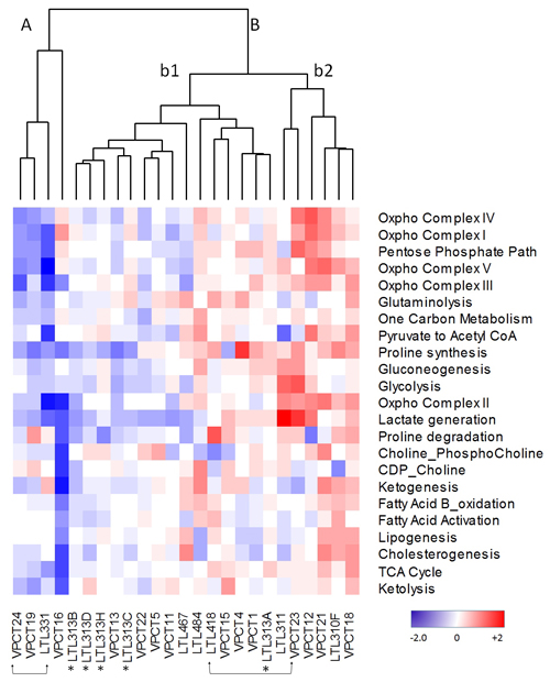 Cluster analysis of metabolic pathway z-scores derived from DESEq RNA sequencing expression data from the VPC Cohort (VPC) compared to z-scores derived from quantile normalized microarray expression data from the PDX cohort (LTL).