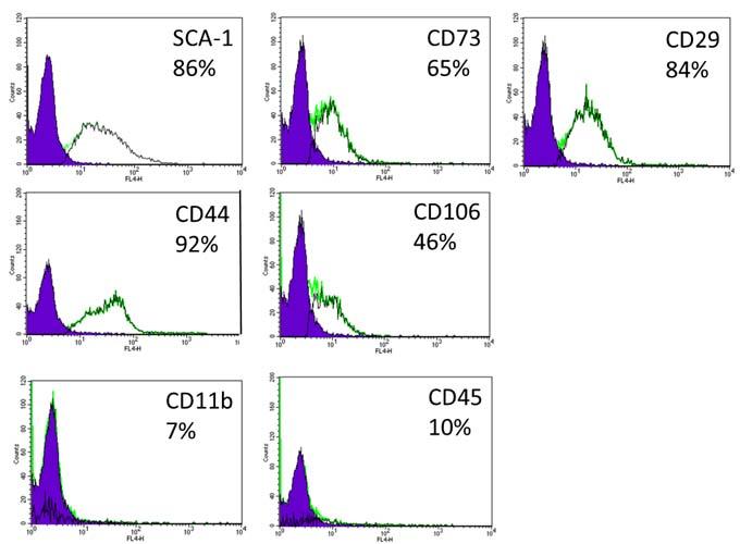 Immunophenotype of MSC cultures.