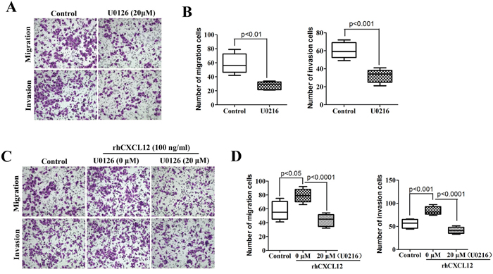 High propensity of invasion and metastasis of ECSCs depends on the CXCL12/CXCR4 activated ERK1/2 pathway.
