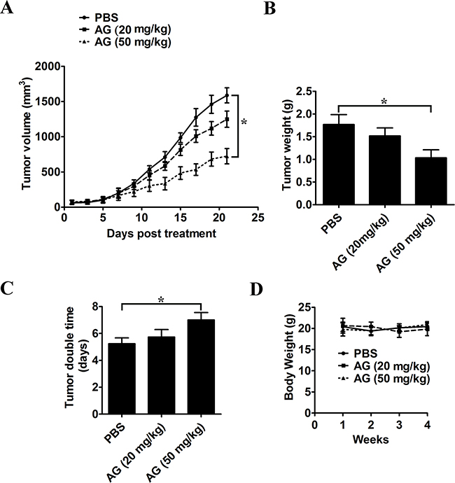 AG treatment inhibits in vivo tumor xenograft growth in a subcutaneous tumor model.