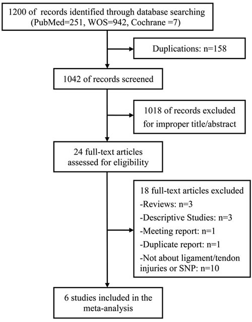 Flow diagram of studies identified, included, and excluded.