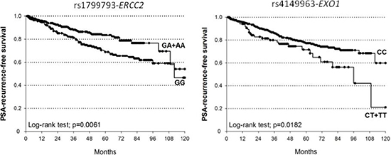 Kaplan-Meier estimates of BCR after RT at 10 years stratified according to genotypes of ERCC2-rs1799793 (median survival: GA+AA=not reached; GG=112 months) and EXO1-rs4149963 (median survival: CT+TT = 96 months; CC = not reached).