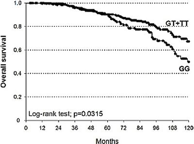 Kaplan-Meier estimates of OS at 10 years stratified according to genotypes of MSH6-rs3136228 (median survival: GT+TT = not reached; GG = 119 months).