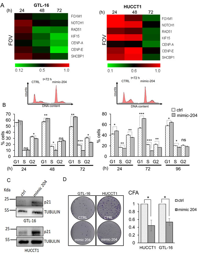 Restoring miR-204 levels in gastric and cholangiocarcinoma cancer cells affects the target signature and some protumorigenic properties of the GTL-16 and HUCCT1 cells.