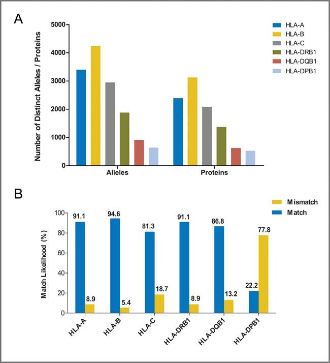 Polymorphism and match likelihood for individual HLA loci.