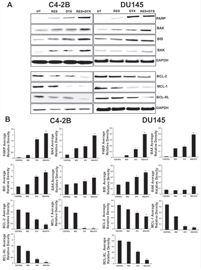 Detection of pro-apoptotic, anti-apoptotic and apoptotic protein in C4-2B and DU145 PCa cells by immunoblotting.