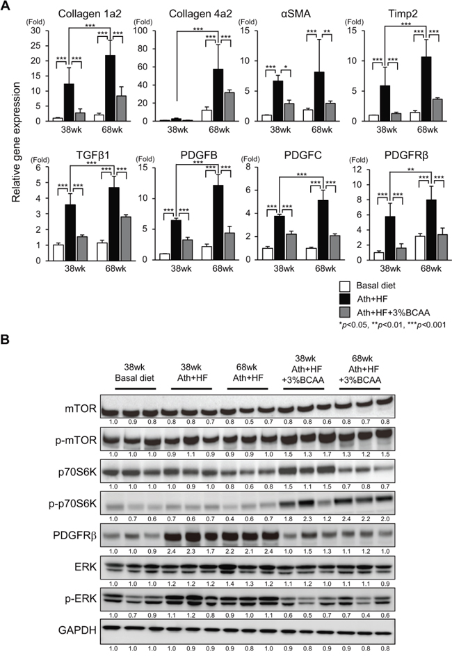 Effects of BCAA supplementation on liver fibrosis, mTORC1, and PDGFRβ signaling in C57BL/6J mice fed the Ath+HF diet.