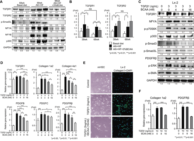 Effects of BCAA on TGF-β1-related signaling in Ath+HF diet mice (A, B), Lx-2 cells (C–E), and primary mouse HSC (E, F).