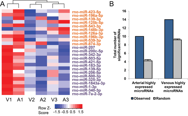 The 24 differentially expressed microRNAs between arterial and venous plasma.