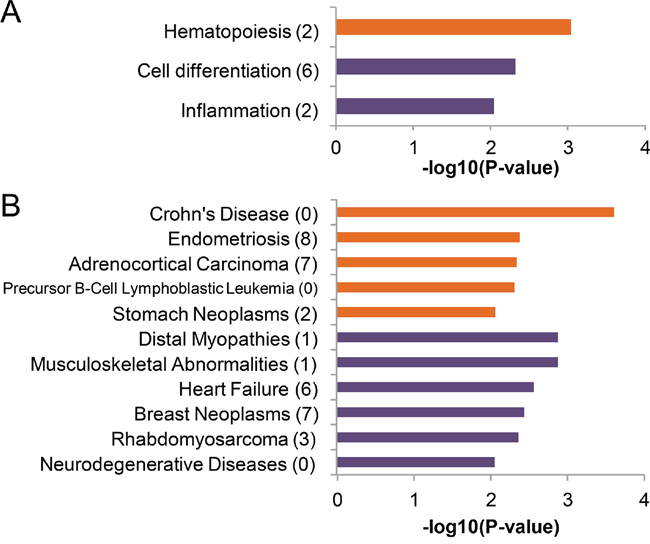 Enriched function and diseases of the differentially expressed microRNAs.
