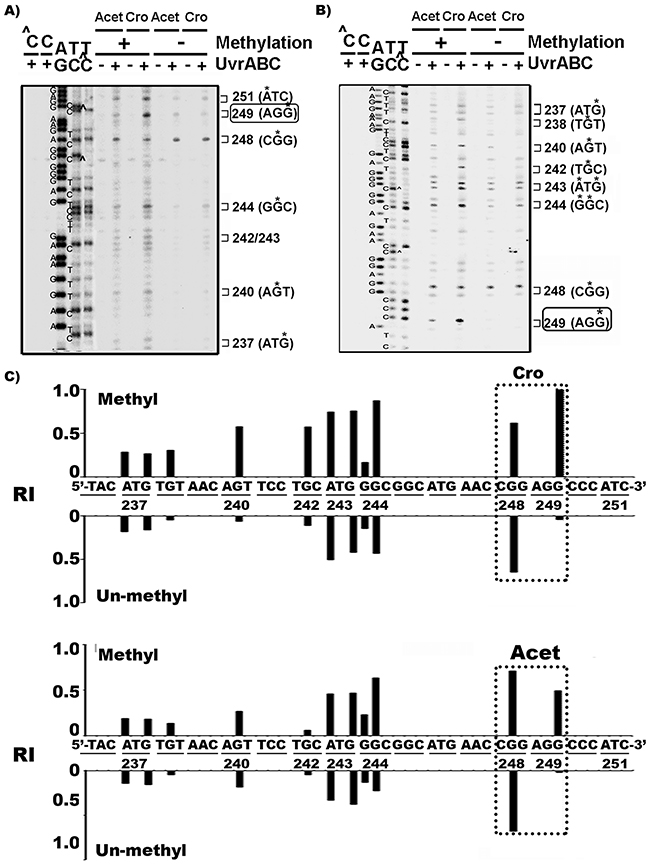 Cytosine methylation at codon 248 (-CGG-) of p53 gene sensitizes codon 249 (-AGG-) for Acet and Cro modifications.
