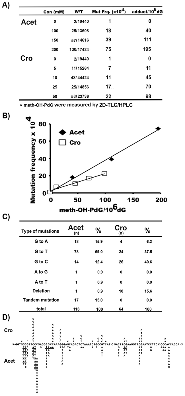 Mutation frequency, spectrum, and signatures induced by Cro- and Acet-DNA modifications.