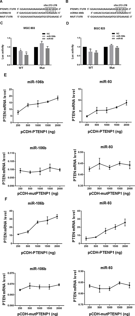PTENP1 modulated PTEN level by competitively binding to miR-106b/miR-93.