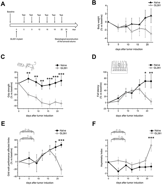 Behavioral characterization of glioma-bearing mice.
