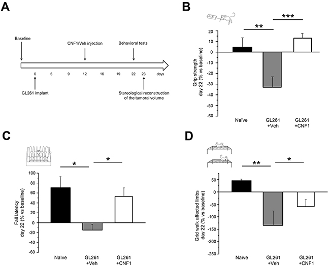 Preservation of motor capabilities in CNF1 glioma-bearing mice.