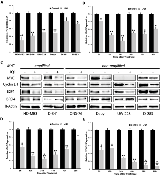JQ1 treatment induces downregulation of MYC and its targets as well as of genes involved in cell cycle progression (cyclin D1 and E2F1).