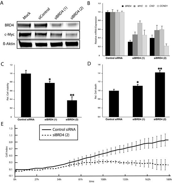 siRNA-mediated BRD4 knockdown phenocopies JQ1 effects in HD-MB3 cells A.