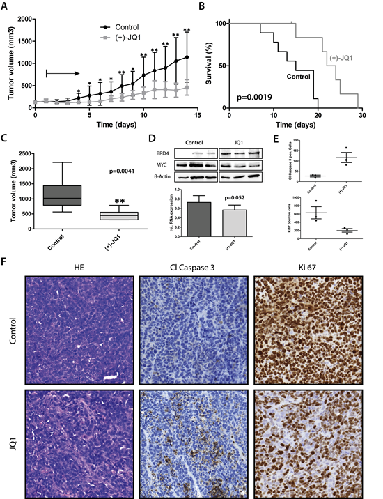 JQ1 treatment significantly prolonged survival and decreased tumor volume in mouse medulloblastoma xenografts.