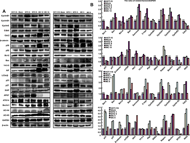 The phenotype-associated molecules were screened in parafibromin transfectants by
