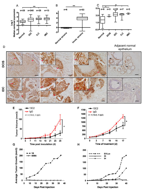 CDH11 mRNA and protein are expressed in ductal carcinoma in situ and invasive breast carcinoma and regulates growth of MDA-MB-231 breast cancer transplanted cells.