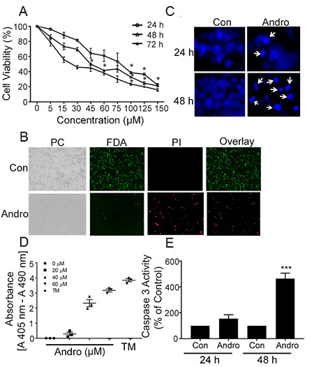 Andrographolide suppresses cell proliferation and cell survival in COLO 205 cells.