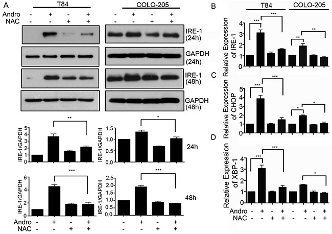 Andrographolide mediated ER stress and apoptosis signaling are dependent on increased ROS.
